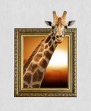 Giraffe im Rahmen mit Effekt 3d Stockfotografie
