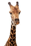 Giraffe isolated Royalty Free Stock Photography