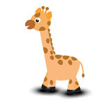 Giraffe isolated on white background Stock Images