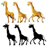 Giraffe and its silhouette in three actions. Illustration Royalty Free Stock Photography