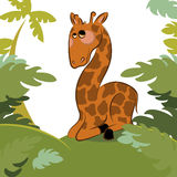 Giraffe in the jungle Royalty Free Stock Image
