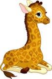 Giraffe-Kalb Stockbild