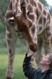 Giraffe and Keeper Royalty Free Stock Image