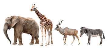 Giraffe, Kudu, Zebra and Elephant Royalty Free Stock Photos