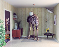Giraffe in the living room Royalty Free Stock Photo