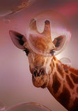 Giraffe looking at soap bubbles - artwork Stock Photography