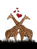 Giraffe in love Royalty Free Stock Photo