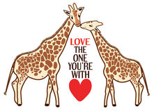Giraffe Love Royalty Free Stock Photo