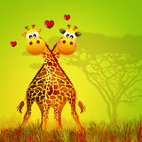Giraffe in love Stock Photo