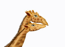 Giraffe Lovers Against a White Background Stock Photos