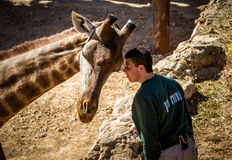 Giraffe and man, Jerusalem Biblical Zoo in Israel Royalty Free Stock Photography