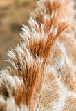 Giraffe mane. Close-up, forming an abstract background Stock Image
