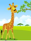 Giraffe mangeant la lame Photo stock