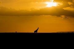 Giraffe Masai στη σκιαγραφία Στοκ Φωτογραφίες