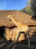 The giraffe model stands in front of the house Royalty Free Stock Photography