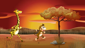 A giraffe and monkey running in a sunset scenery Stock Photo
