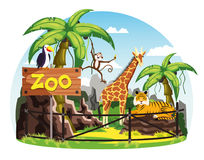 Giraffe and monkey, tiger and toucan at zoo. Animals behind fence and zoo sign. Giraffe and monkey or chimpanzee, tiger and toucan bird scenery with trees and Royalty Free Stock Photography