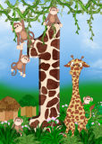 Giraffe with monkeys Royalty Free Stock Image