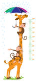 Giraffe and monkeys. Meter wall or height chart Stock Images