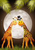 Giraffe in the moonlight Royalty Free Stock Image