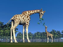 Giraffe mum feeding giraffon - 3D render Royalty Free Stock Photo