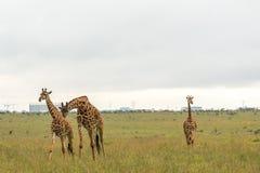 A giraffe at the Nairobi National Park Stock Photo
