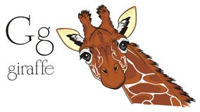 Giraffe with neck and abc. Cute giraffe with black word giraffe and black word giraffe royalty free illustration