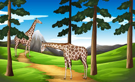 Giraffe nella foresta illustrazione di stock