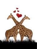 Giraffe no amor ilustração royalty free