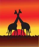 Giraffe no por do sol Fotos de Stock Royalty Free