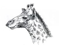 Giraffe pattern black white is executed by ink. Portrait of a giraffe, the head of an African animal, a sketch - illustration of an album of impressions Royalty Free Stock Images