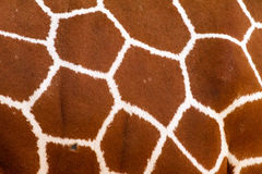 Giraffe pattern Royalty Free Stock Photos