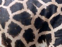 Giraffe pattern Royalty Free Stock Photo
