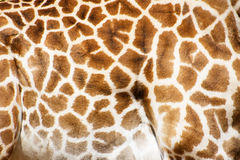 Giraffe Patterns Royalty Free Stock Photos