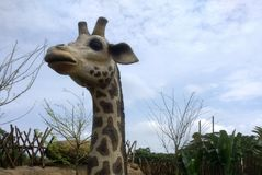 The Giraffe. This photo a figure with a shape of girafe Stock Image