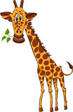Giraffe with a plant Royalty Free Stock Image