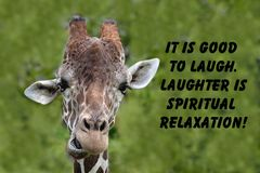 Giraffe quote Stock Images