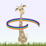 Giraffe and rainbow Stock Photos