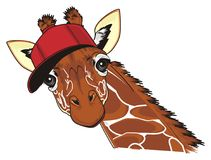 Giraffe in red cap Royalty Free Stock Photo