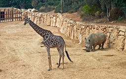 Giraffe and rhino Stock Photo