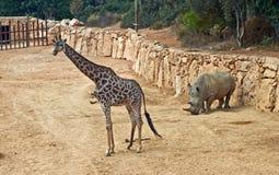 Giraffe and rhino Stock Photo