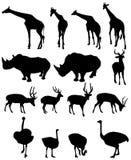 Giraffe,rhinoceros, deer,ostrich Royalty Free Stock Photos
