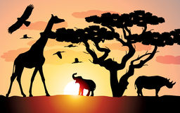 Giraffe, rhinoceros and elephant Royalty Free Stock Photo