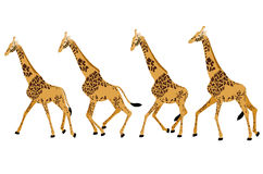 GIRAFFE RUN Stock Images