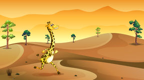 A giraffe running at the desert Stock Images