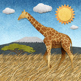 Giraffe  in Safari field recycled paper background Stock Photography