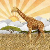 Giraffe  in Safari field recycled paper background Royalty Free Stock Image