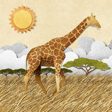 Giraffe  in Safari field recycled paper background Royalty Free Stock Images