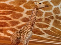 Giraffe with same texture pattern Stock Photo