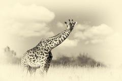 Giraffe on savannah in Africa. Vintage effect Royalty Free Stock Image